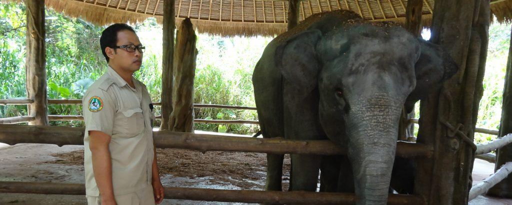 elephant bali